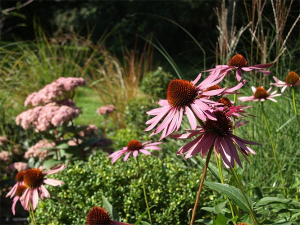 Addington Breathe Garden Design Ltd